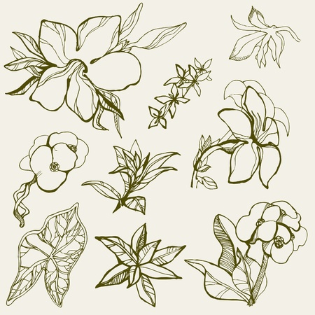 Set of floral design elements -  flowers Vector