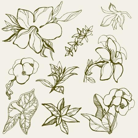 brie: Set van floral design elementen - bloemen
