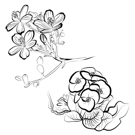 freehand drawing: Set of floral design elements -  flowers