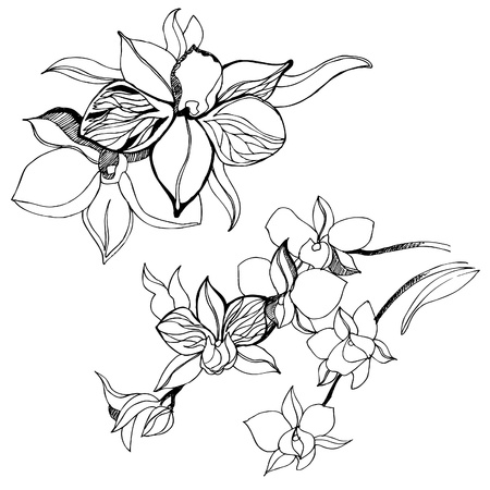 orchid tree: Set of floral design elements - orchid flowers Illustration