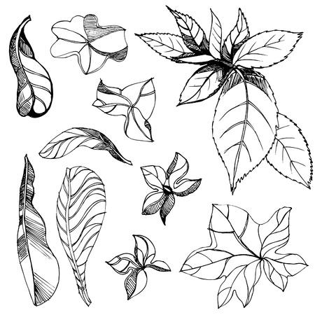 brie: Set van floral design elementen - plant bladeren