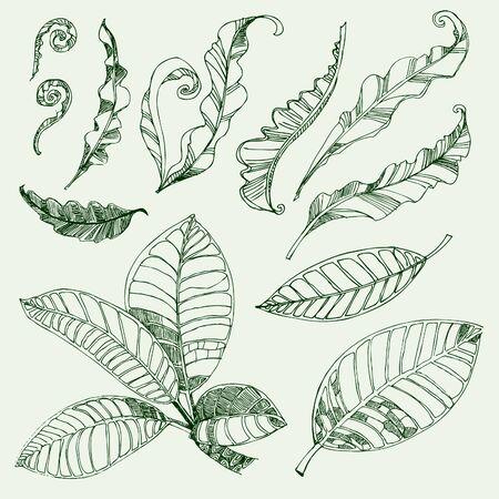 fern: Set of floral design elements - coffee and fern leafs