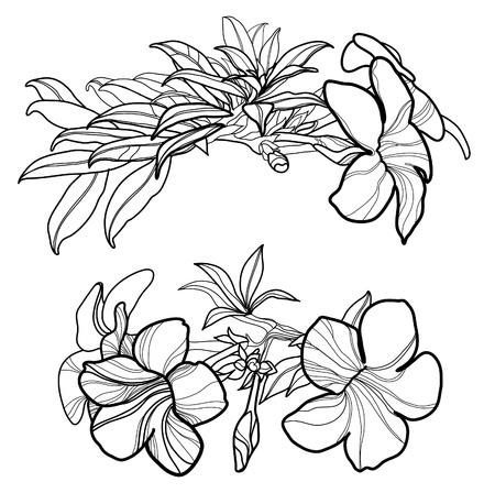 Set of floral design elements - flowers