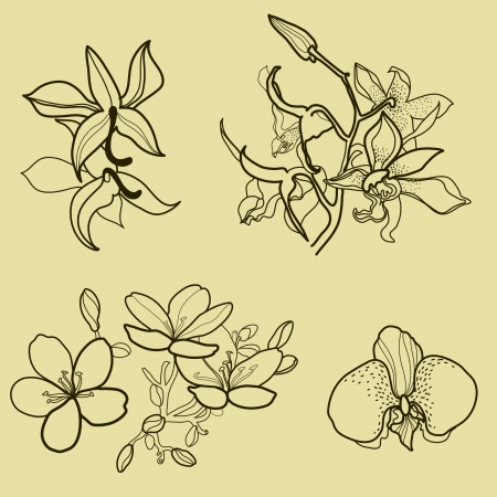 Set of floral design elements - orchid flowers Vector