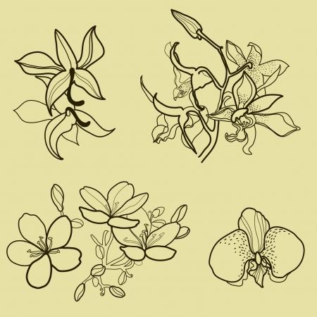 brie: Set van floral design elementen - orchidee bloemen