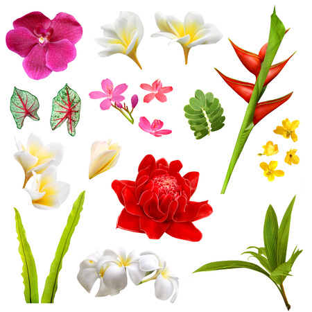 Set of isolated tropical plants, leafs and flowers Stock Photo