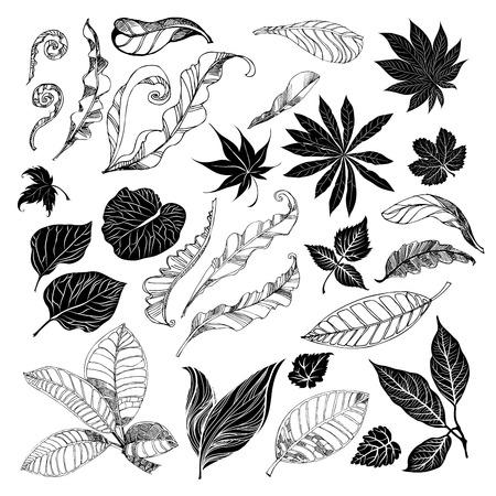 brie: set of black floral design elements - leafs