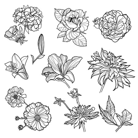 flower sketch: Set of black floral design elements - sketches of flowers