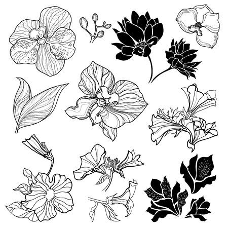 brie: Set of black floral design elements - sketches of flowers