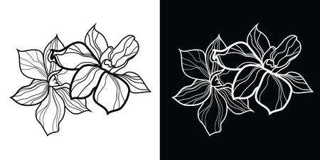 orchid: Set of floral design elements, freehand drawing - flowers