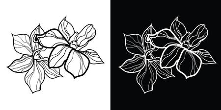 Set van bloemen designelementen, vrije hand tekening - bloemen