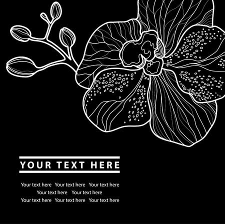 Vector organic natural floral frame background - design elements Reklamní fotografie - 47519494