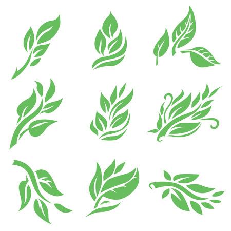 Set of vector floral design elements, leafs, plants Illustration