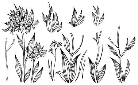 Set of vector black flower design elements. Freehand line illustration.