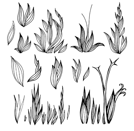 Set of vector black flower design elements. Freehand line illustration.