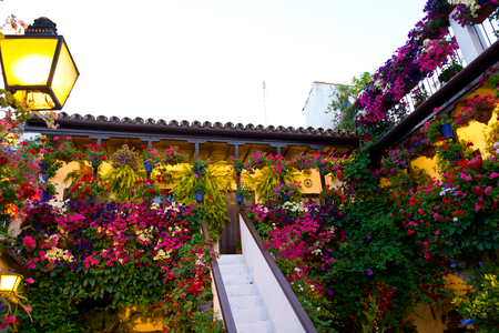 traditional flower-decorated patio in cordoba, spain, duriing the Festival de los Patios Cordobeses