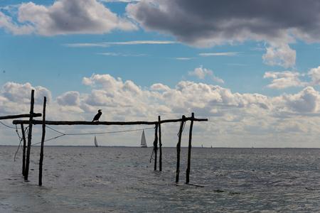 Creel poles with cormoran in � ? rø, Denmark