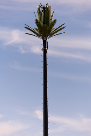 cellphone broadcasting tower disguised as palm tree, morocco Stock Photo