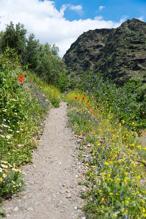 sierra nevada: mountain path in sierra nevada, andalusia, spain