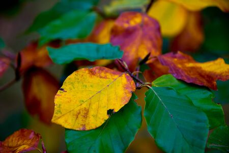 colorful autumn foliage and golden leafs in brandenburg forest