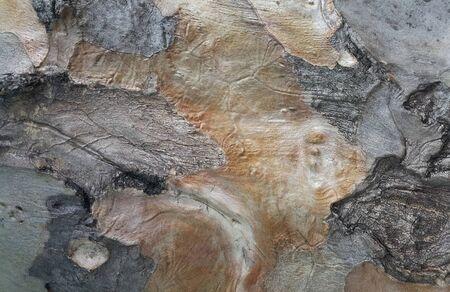 Die Oberfläche des Baumstammes, Naturholz Hintergrund, Baumrinde, Textur, Muster, Kunst, Farbe, Tapete