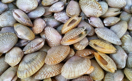 Clams sale at the market. baby clams (short necked clams)�,clam thai, venus clams,be alive Stock Photo