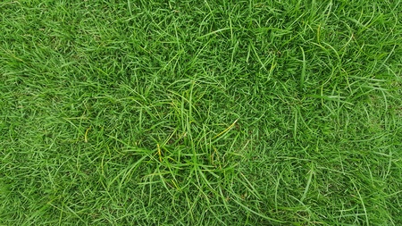 grass background in the park  with copy space.Green lawn texture. Stock Photo