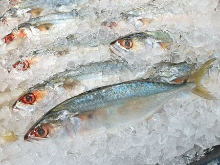 Fresh mackerel fish that are high in Omega 3.Fish on ice in supermarket. Is fish lives in sea and popular to cook because it is inexpensive and tasty Stock Photo