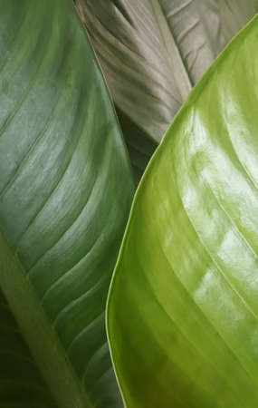 tropical leaves texture. green leaves wallpaper. Leaf pattern background