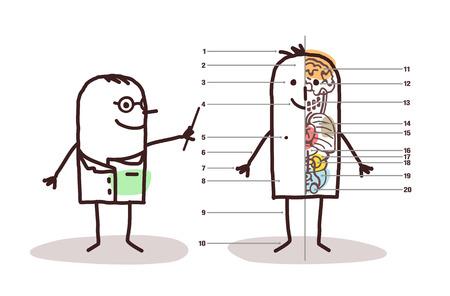 cartoon male anatomy lesson Stock Photo