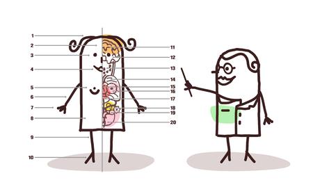 cartoon female anatomy lesson Stock Photo