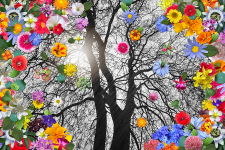 Winter Tree and Colorful Spring Flowers