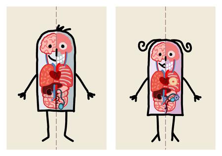 Cartoon man and woman anatomy Stok Fotoğraf - 120080445