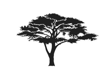 acacia tree silhouette. australian and african tree. nature and landscape design element