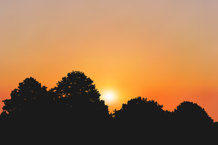 Colorful sunset or sunrise near a forest illustration