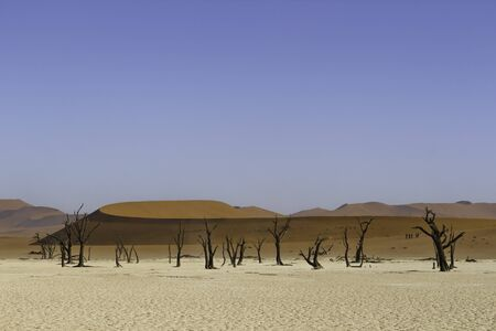 vlei: Deadvlei, or Dead Vlei, a white clay pan located near the more famous salt pan of Sossusvlei, inside the Namib-Naukluft Park in Namibia Stock Photo