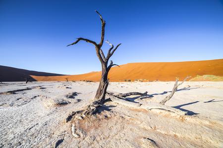 quemado: Los árboles en Deadvlei, o Vlei muerto, una olla de arcilla blanca situada cerca de la más famosa salar de Sossusvlei, dentro del Parque Namib-Naukluft en Namibia Foto de archivo