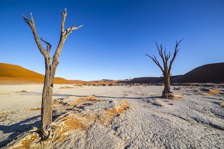 vlei: Trees in Deadvlei, or Dead Vlei, a white clay pan located near the more famous salt pan of Sossusvlei, inside the Namib-Naukluft Park in Namibia Stock Photo