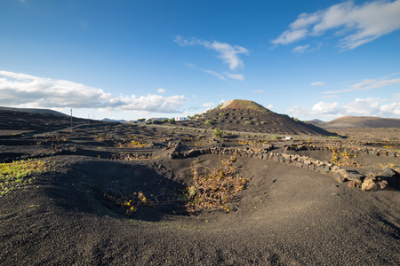 View of La Geria, the famous vinegrowing region of Lanzarote, and its crescent-shaped stone walls, known as zocos, implanted in the dark earth, in Canary Islands, Spain.