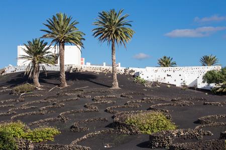 ラ ゲリアのビュー、ランサローテ島の有名な農法地域およびその三日月の形をした石造りの壁、zocos、として知られている暗い地球、カナリア諸島、スペインの移植。