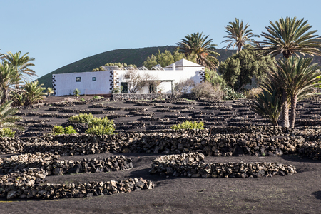 bartolome: View of La Geria, the famous vinegrowing region of Lanzarote, and its crescent-shaped stone walls, known as zocos, implanted in the dark earth, in Canary Islands, Spain.