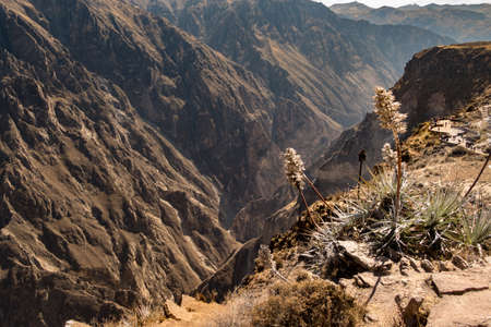 Panoramic view of Colca Canyon, near Chivay, in Peru.