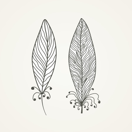 Pair of stylized feathers