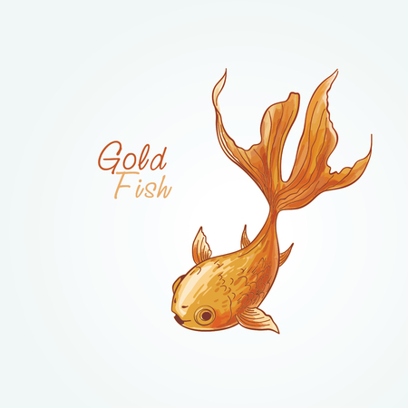 Goldfish on a white background Illustration