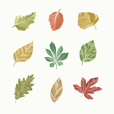 A set of leaves of various trees
