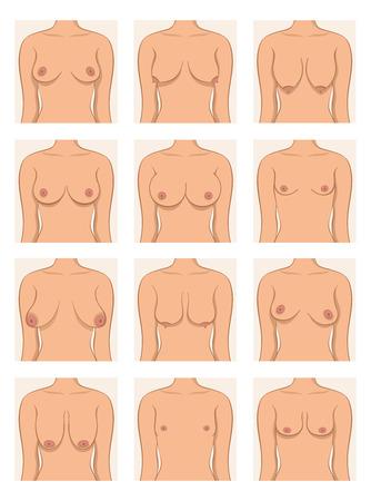 Types de femmes Vecteurs