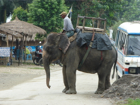 tradional: Elephant with its driver in Chitwan, Nepal