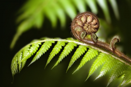 New Zealand iconic fern koru Stockfoto