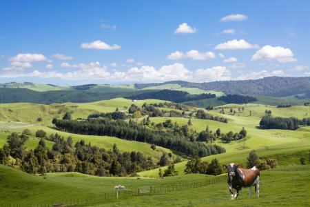 Bull grazing on the picturesque landscape background photo