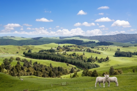 Two lambs grazing on the picturesque landscape background photo
